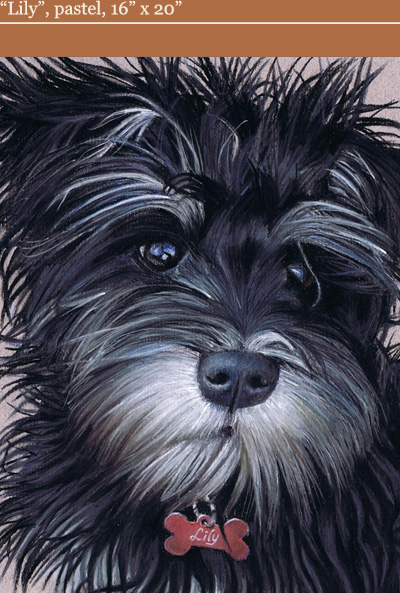 Andrew Howard Art - 'Lily', pastel dog portrait